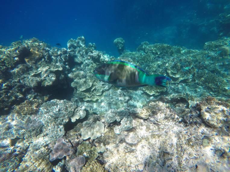 Gran Barrera de Coral en Australia, una experiencia increíble rodeados de peces de colores.