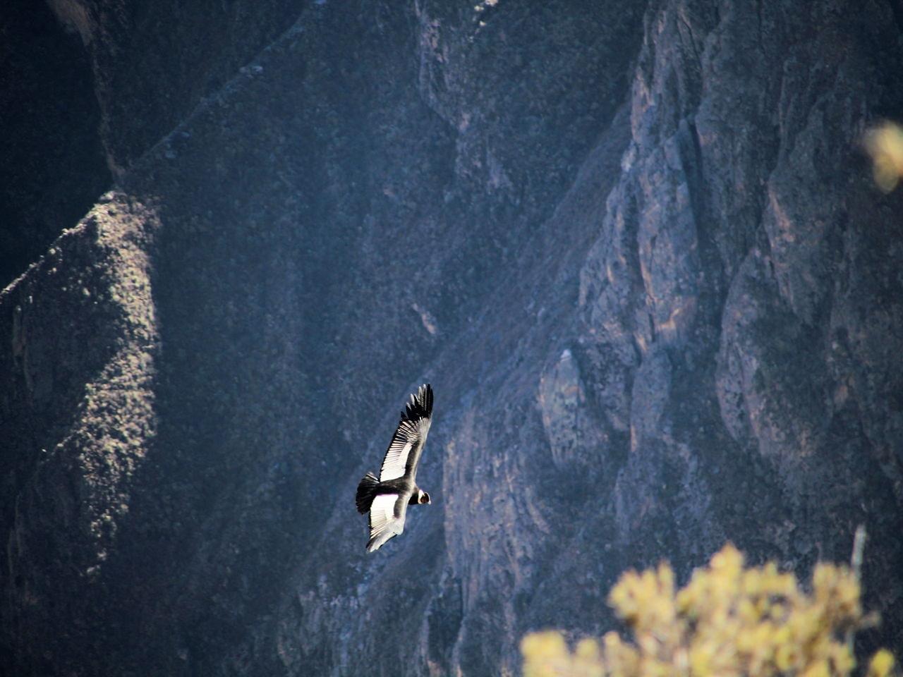 Arequipa en tres días: Cruz del Cóndor
