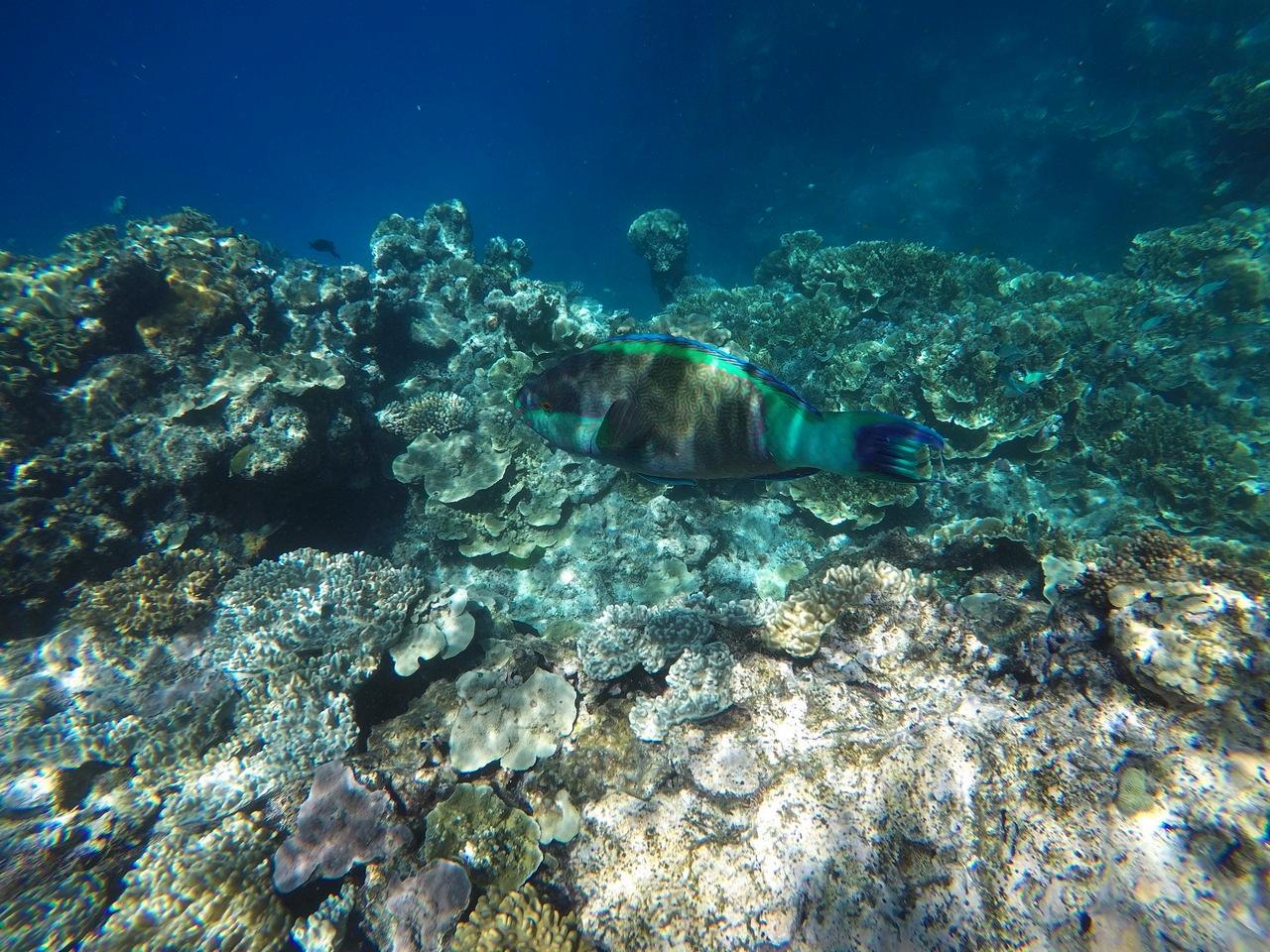 Peces de colores en la Gran Barrera de Coral.