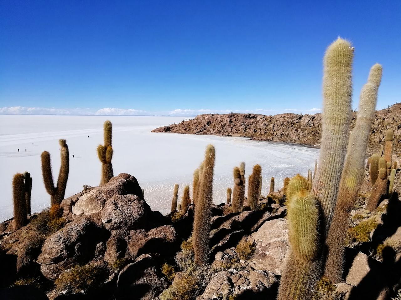 Tour de 3 días por el Salar de Uyuni: Isla Incahuasi.