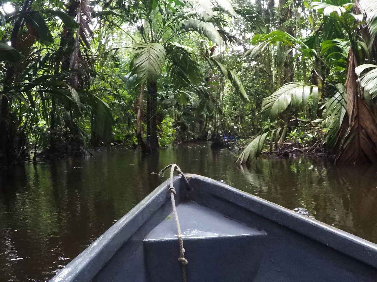 Paseo en canoa por la laguna de Tortuguero.