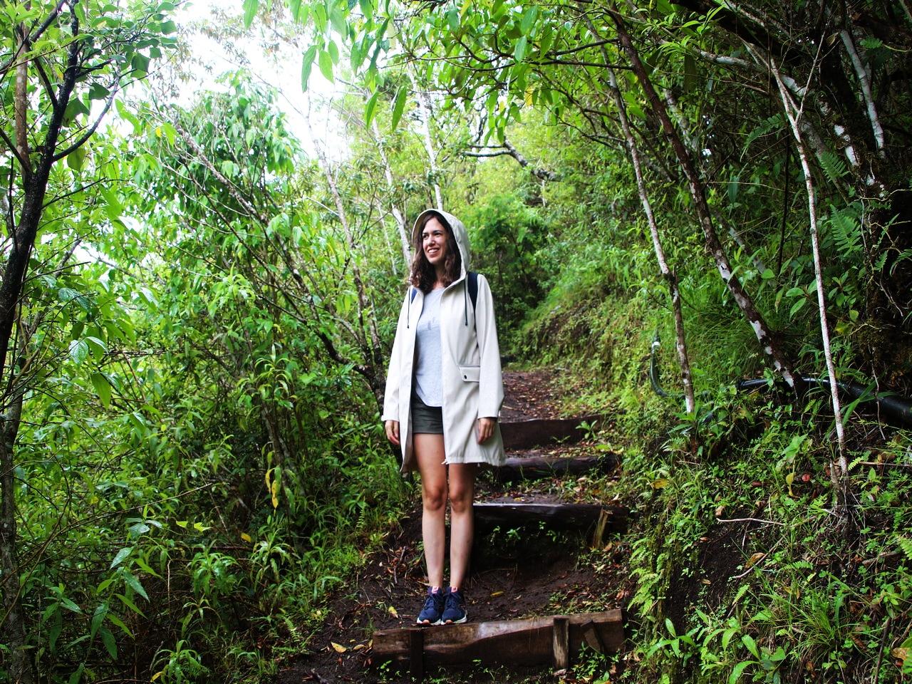Paseo por los bosques de Monteverde.