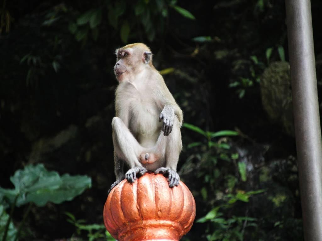 Cuidado con los macacos que verás en la escalera de colores y en el interior de Temple Cave.