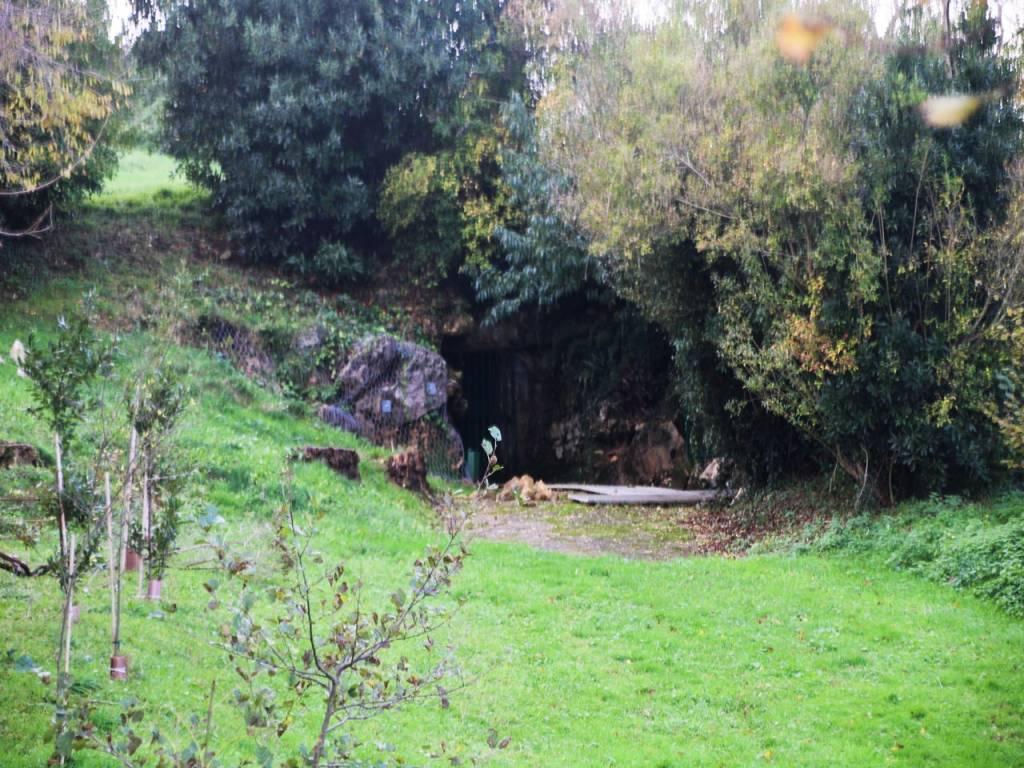 A la Cueva de Altamira original solo se puede acceder por sorteo el viernes a las 10:30 horas en el Museo de Altamira.