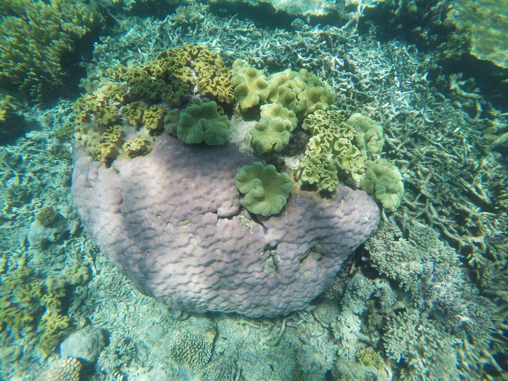 La Gran Barrera de Coral en Australia ofrece imágenes como ésta.