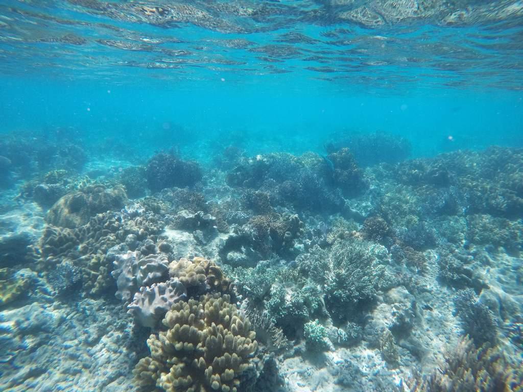 Te espera un día de aventura entre arrecifes de coral y aguas azul turquesa.