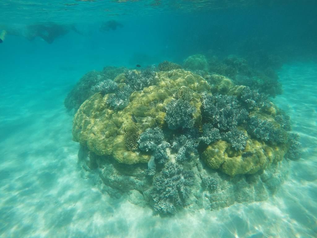 La Gran Barrera de Coral está en el estado de Queensland, al noreste de Australia.