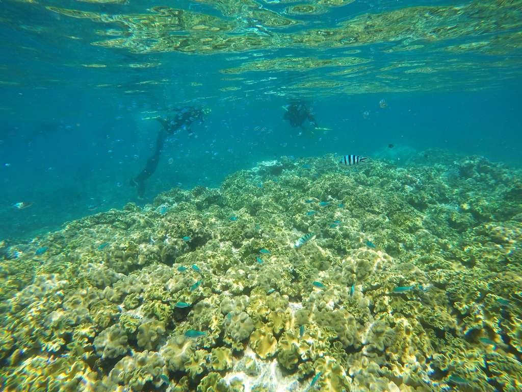 Jamás había hecho snorkel entre tantos corales y peces de colores.