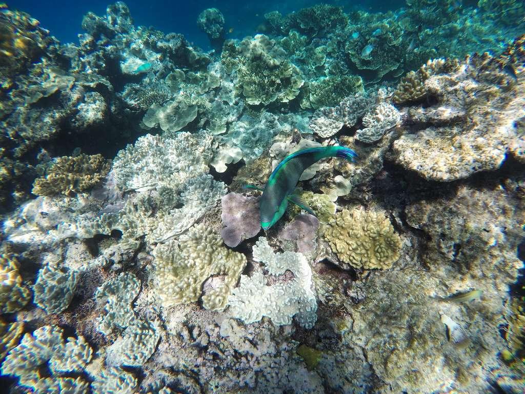 Peces de colores en el mayor arrecife de coral del mundo.