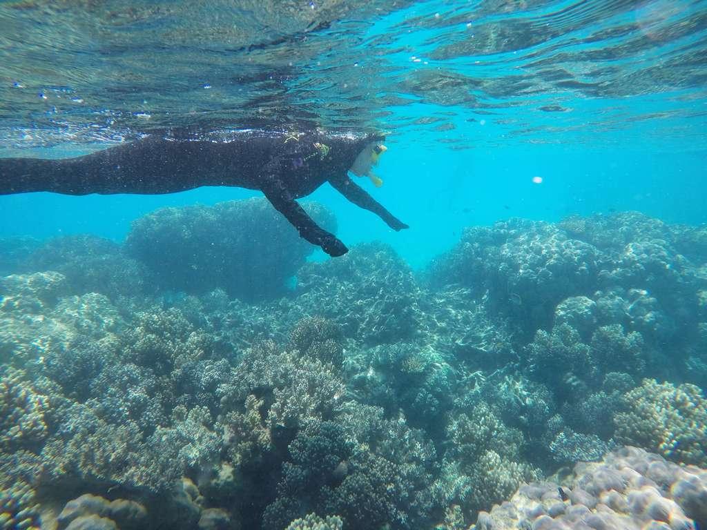 Hacer snorkel en Australia es una experiencia súper recomendable.