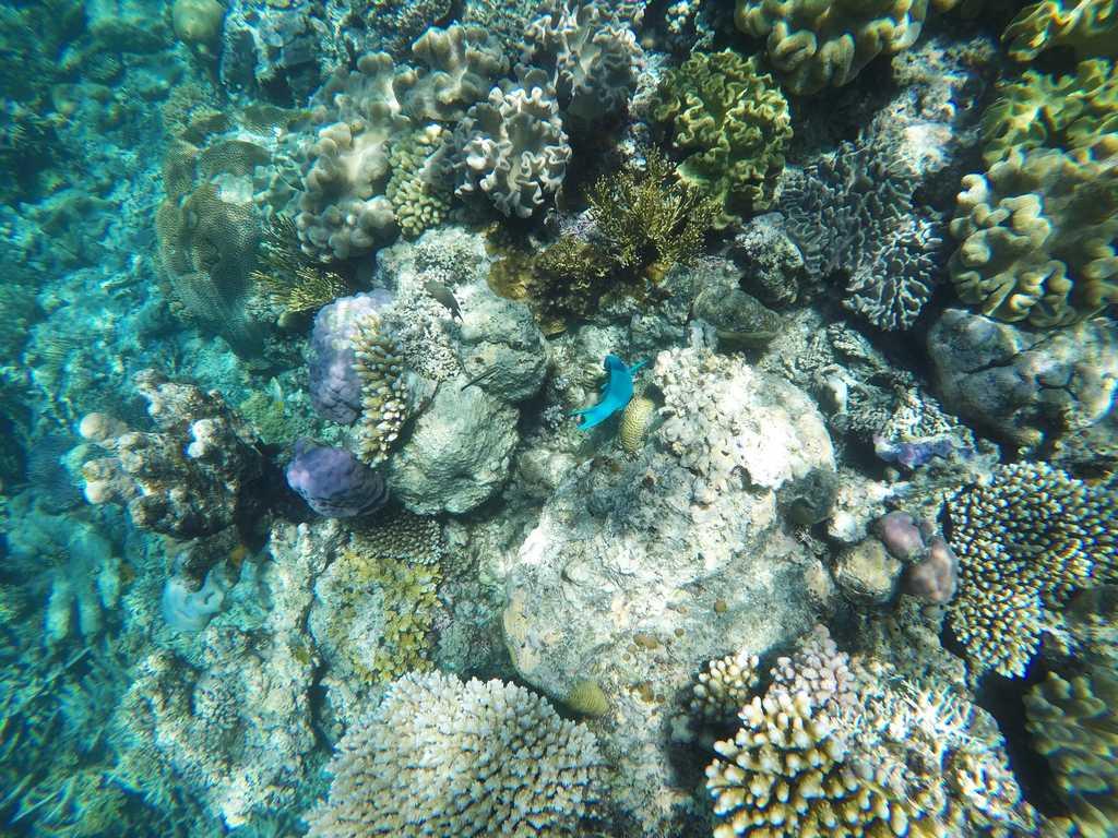 Más peces de colores y arrecifes coralinos en Australia.