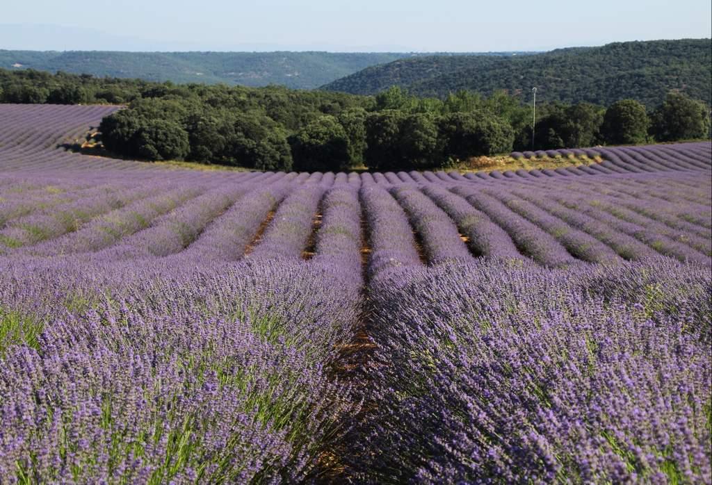 Las ondulaciones del terreno teñido de color violeta me llamaron mucho la atención.