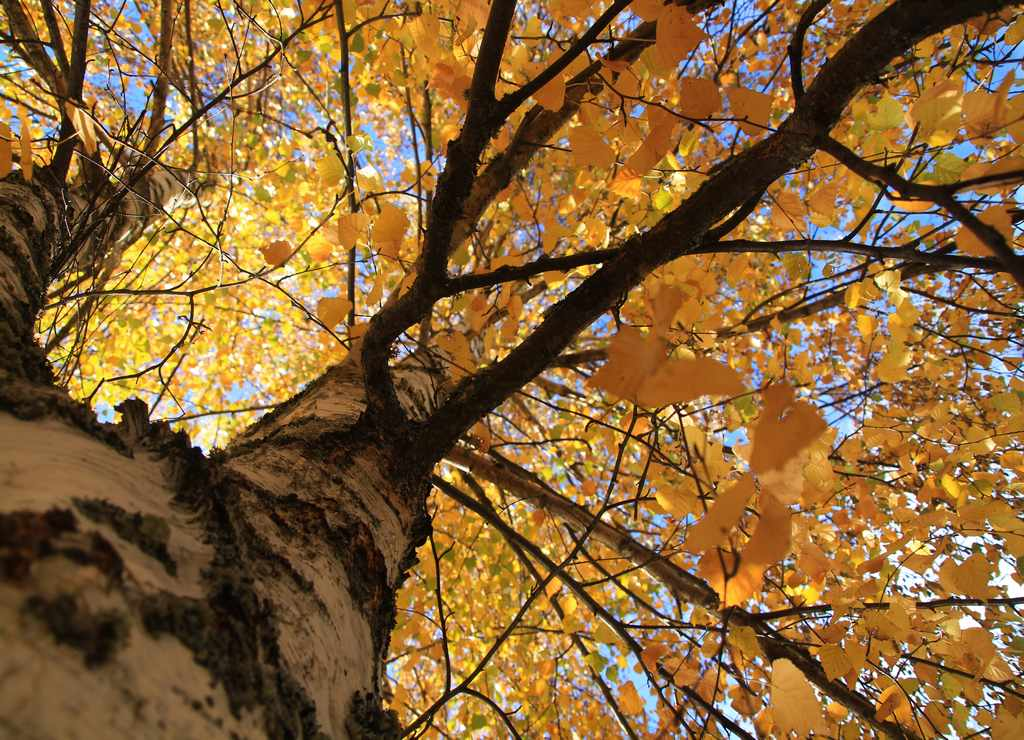 La Hiruela es uno de los pueblos más bonitos de Madrid, especialmente en otoño.