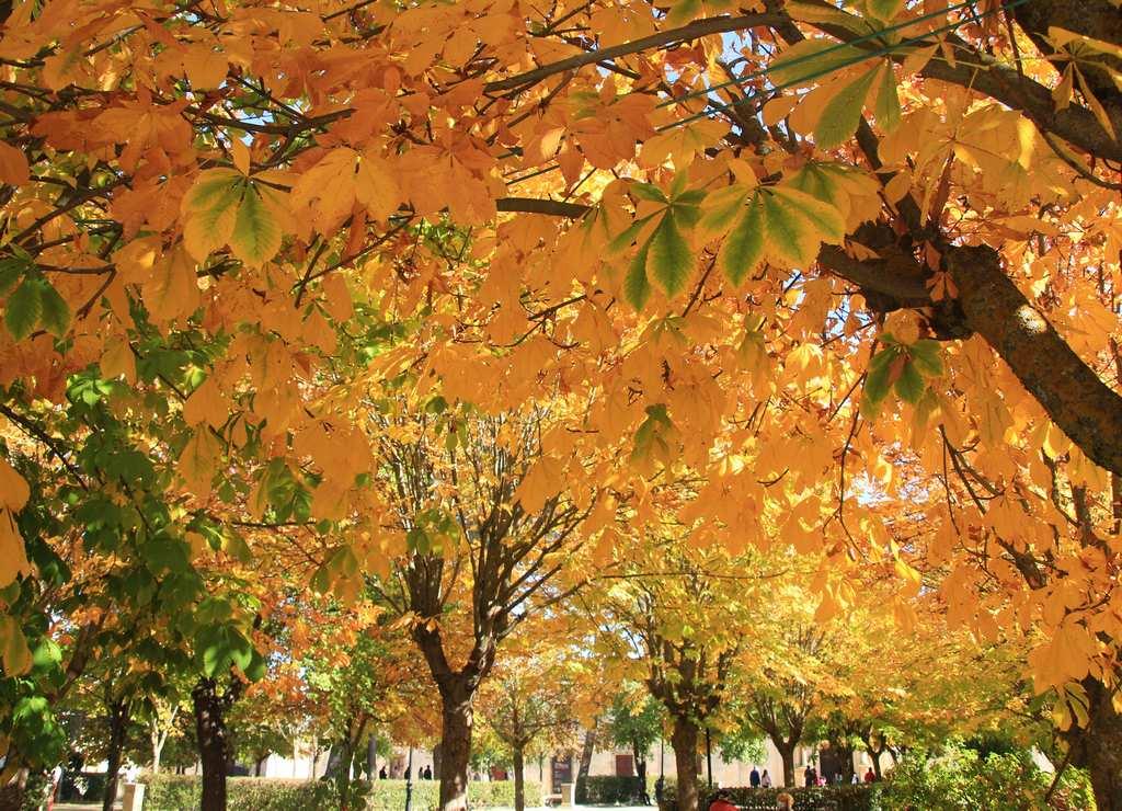 Una de las mejores épocas para visitar Nuevo Baztán es en otoño por el color de sus árboles.